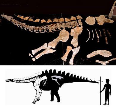 stegosauro-dal-collo-lungo-portogallo