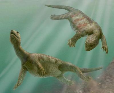 tartarughe-antenato-nonno-Odontochelys-Semitestacea-cina
