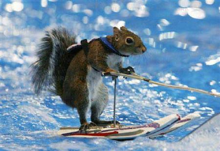 twiggy-sci-nautico-scoiattolo-squirtle
