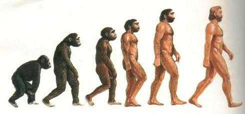 uomo-scimpanze-bipede