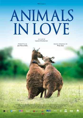 Animals-in-love-animali-in-amore-canguri.jpg