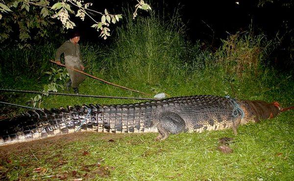 coccodrillo-piu-lungo-del-mondo-record-02