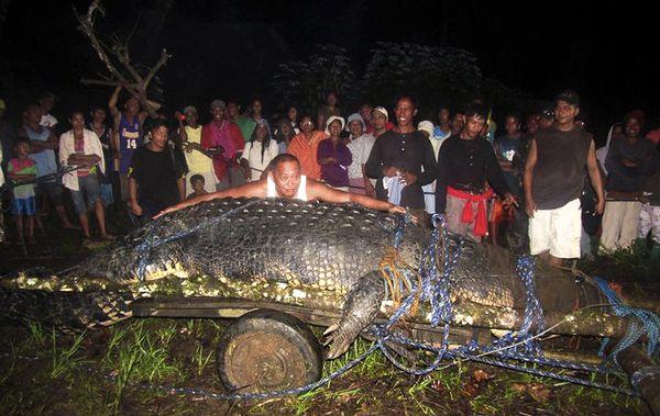 coccodrillo-piu-lungo-del-mondo-record-03
