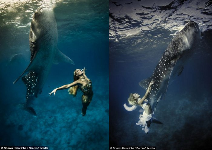 squali-balena-fotomodelle-05