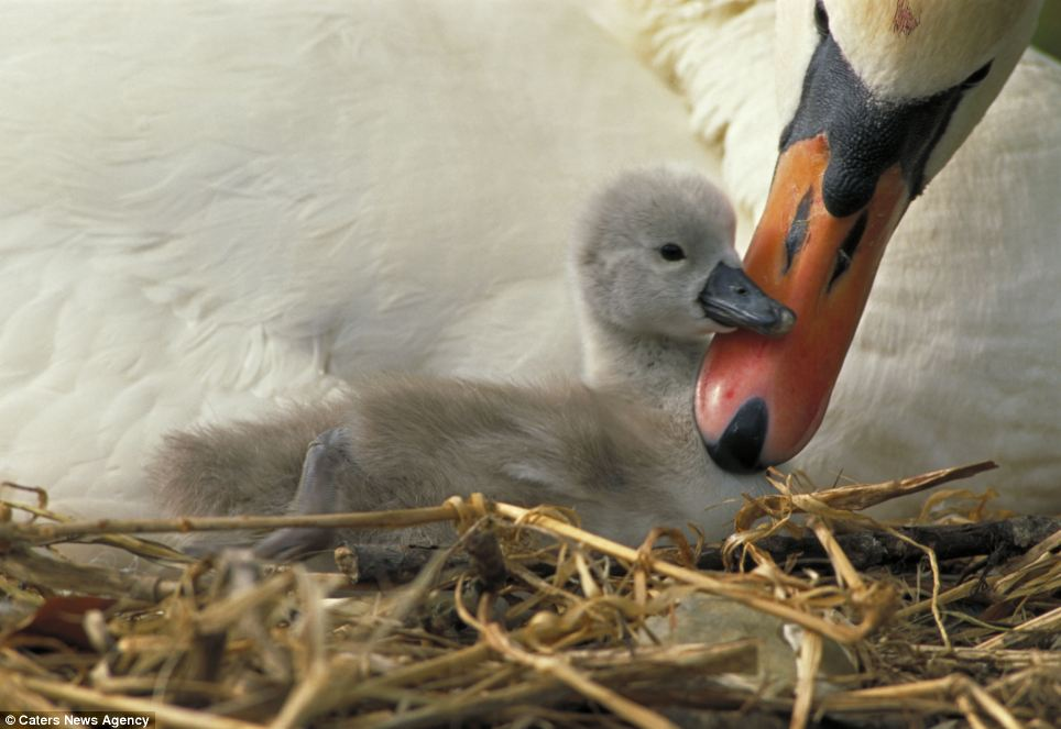 mamma-cuccioli-animali-ambiente-foto-01