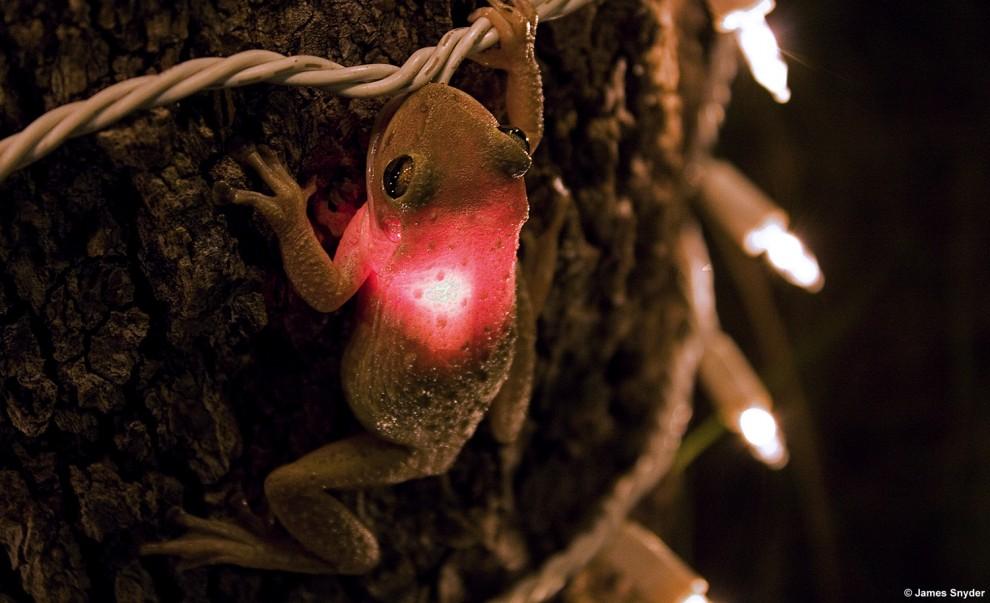 rana-ingoia-lampadina