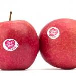 mele-apple-truffa-iphone-01