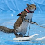 twiggy-scoiattolo-sci-nautico-02