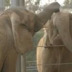 elefante-amicizia-incontro-04