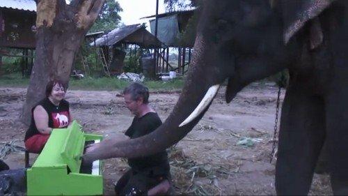 elefante-suona-pianoforte-duetto-pianista-paul-barton